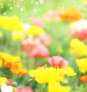 春ウタ・桜ソング特集